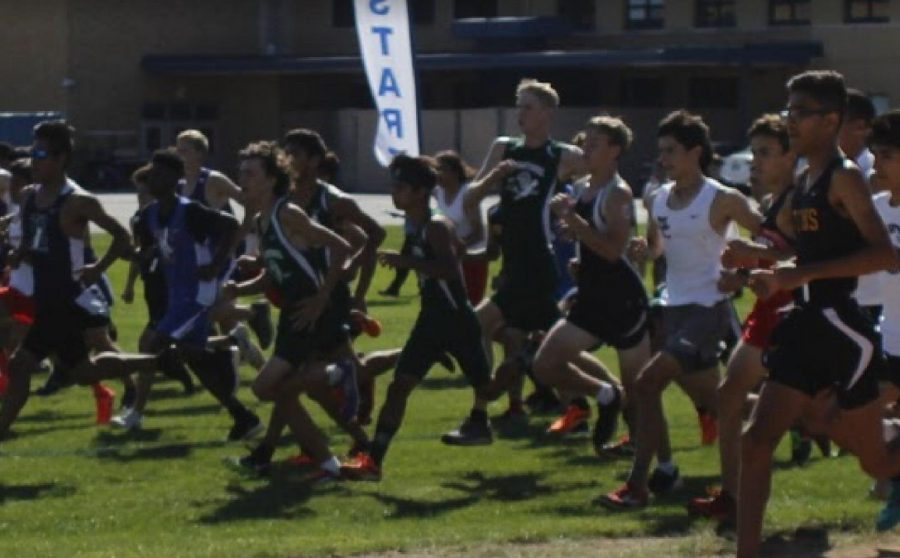 Cross Country Team Races to Success