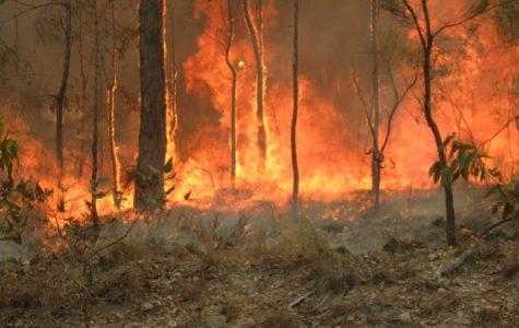 Devastating Wildfires Engulf Australia